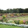 訪れた庭園その8-フランスの庭園