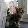 ドイツの猫🐈グッズ その3 (お手入れ編)