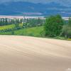 美瑛の丘はタンポポ色