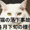 猫の落下事故4月下旬の様子について