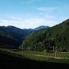 秋の静かな茶畑