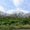 きのこの山ならぬ、パセリの森