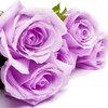 紫のバラと高齢女性が教えてくれたこと どんな時も未来を信じれば叶うかもしれないことがある。