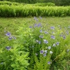 万博公園 夏の花 花言葉
