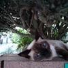 猫とジャコウアゲハの幼虫