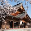 護国神社から磯部堤の桜