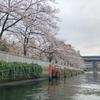 都内の川をレンタルボートで運転しながらお花見クルージング