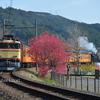 春の東海キャラバン 大井川鐵道画像集/鉄道写真 〜鉄の道に古豪はいつまでも〜