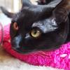 今日の黒猫モモ&白黒猫ナナの動画ー716