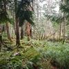 家の裏の温帯雨林風景