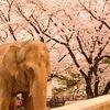 2歳児を連れての姫路城のお花見は動物園がメイン!