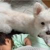 ☆生後41日目*続・愛犬、授乳にヤキモチ☆