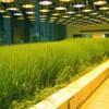 ビルの中に作られた水田と菜園