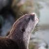 《アドベンチャーワールドでデジカメ撮影》OLYMPUSPEN-LITEPL-7+望遠レンズ 動物撮影で癒される