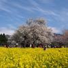 回顧録 no.68  「‥夢の風景 ~一心行の大桜 」
