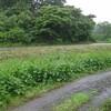 草刈りウィークエンド