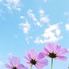 野に咲く一輪の花のような姿勢