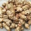 野菜の移植とキクイモ掘り