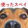 犬を使ったスペイン語【Perro】