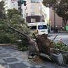 天災の思考~「守るモノが少ない」地震・台風への役立つ気休め