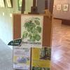 長池公園自然館のボタニカルアート展を楽しむ。八王子古本まつりで11冊購入。