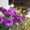 生花の販売を始めたユニクロ そのワケは