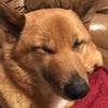 愛犬の結膜炎*桜 満開
