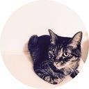 キジトラ猫くろのブログ