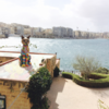 『マルタ島猫さんぽ』マルタの猫スポット紹介 マルタ共和国留学体験その2
