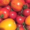 トマト、とまと、トマト。