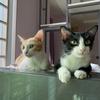 【手続き編】猫をカンボジアから日本へ連れて行く