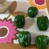 市民菜園で野菜づくりに挑戦!11 〜ピーマン収穫