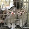 不妊化手術は絶対!猫の一斉不妊化手術のお話その3(最終話)