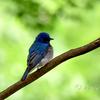 幸せの青い鳥?