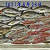 6月に日本海で釣れる魚はコレ👆 【  ボートゲーム / 釣魚のまとめページ  】 ※順次更新中