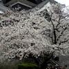 熊本市で9度1分