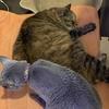 暑くなってきたので床に猫が落ちてる