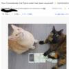 【紹介】Considerate cat Tarot|①オーダーの仕方について
