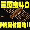 【イマカツ】トーナメントでも活躍の究極の虫系ワーム「三原虫40」次回出荷分予約受付開始!