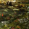 東京版の「モネの池」は小規模だが、人間関係が苦手な人におすすめの穴場である