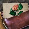 【風水🔮でおすすめ】茶色・ベージュ色の財布👛はお金を生む💴