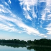 蜻蛉池公園の自然の中でリフレッシュ