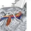 腕の痛みの原因となる「胸郭出口症候群」について整形外科医が解説してみました