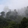 懐かしい写真 から 森、2つのブログ