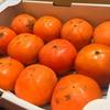 福岡県 井上果樹園の「こいひめ柿」
