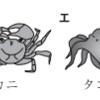 昆虫はどうやって呼吸しているのか(2019年和歌山)
