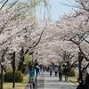 【雑記】 千波湖に桜を見に行ってきた