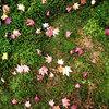 【芸術の秋】紅葉狩りと芸術鑑賞と建築美が一度に楽しめる♪ 一石三鳥な美術館&博物館情報
