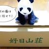 好日山荘でマムート(Mammut)福袋を買いました☆2019年