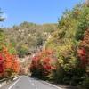 吉備中央町 裏豪渓の紅葉と天の岩は絶景!